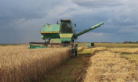 Вобласти собрано больше 70 процентов урожая зерновых