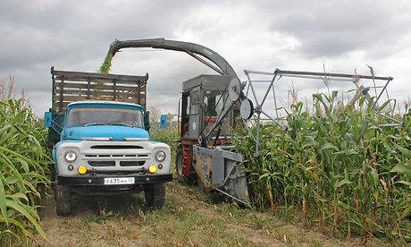 ВХарьковской области собрали больше 70% урожая зерновых